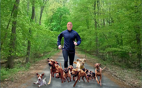 Frank running on a trail with dogs